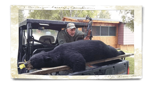 black bear hunting northern ontario