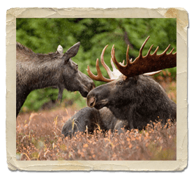 moose hunting in northern ontario lodge